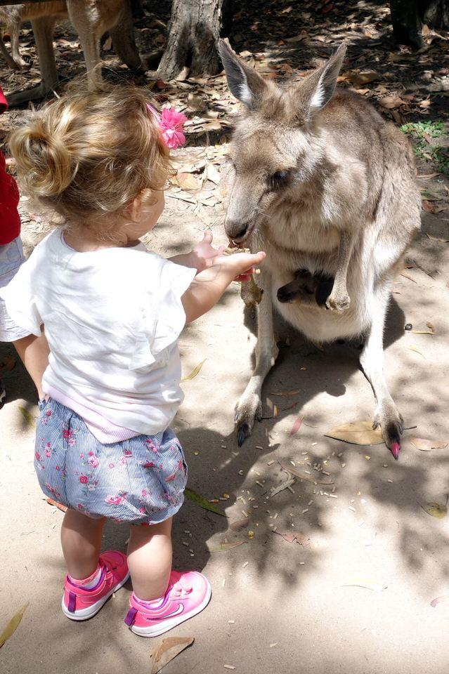 Steve Irwin Australian Zoo